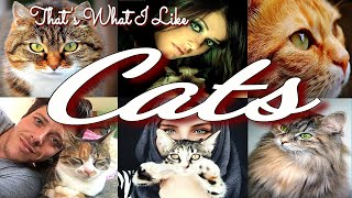 That's What I Like - Cats - Kittens | Cats Video | Cutest Cats | Cats Are Beautiful | Best Cats