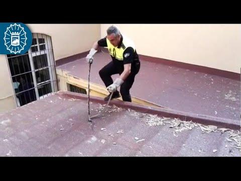 La Policía Local de Málaga captura una culebra de 1,6 metros