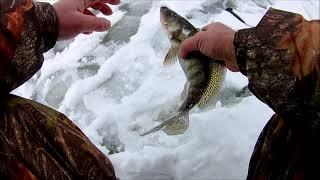 Саратов чардым рыбалка 18 окунь сорожка по льду