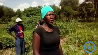 Eldoret street families eke living farming along River Sosian banks