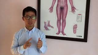 3-minute Chinese Medicine study---Meridian 27/03/2018