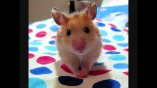 Cute Hamster Photos