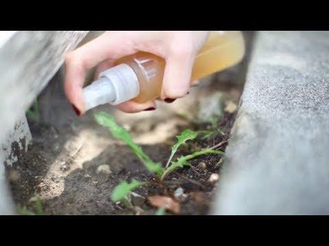 Que curar el hongo del pulgar en los pies