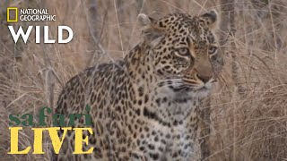 Safari Live - Day 193   Nat Geo Wild