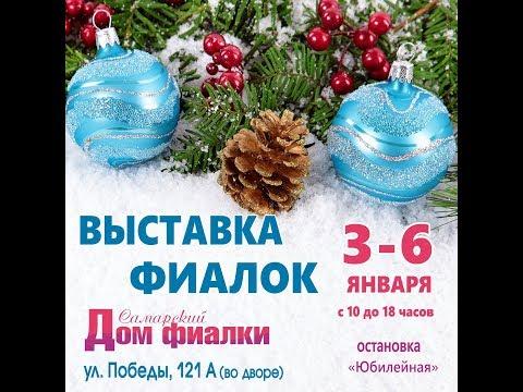 ВЫСТАВКА ФИАЛОК 3-6 января,Самарский Дом фиалки.