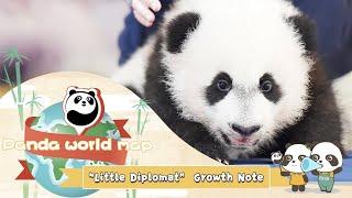 "Panda World Map-""Little Diplomat"" Growth Note | iPanda"