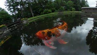 #360 video animals birds and fish #beautiful nature