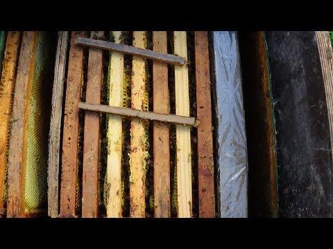 Едрён компот и иммунитет пчелы на пасике