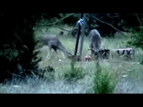 9 Point Buck Hunt 2015 at Sisco D Ranch