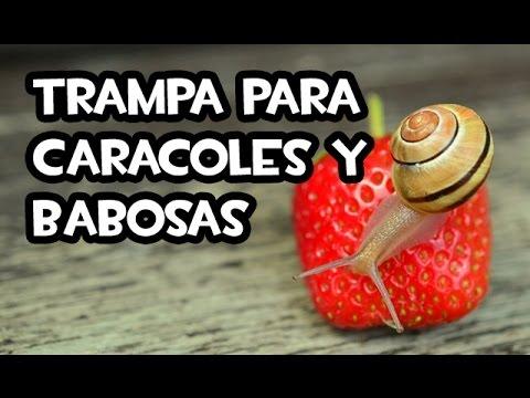 Trampa para Caracoles y Babosas | Nuevo Modelo