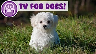 TV for Dogs! Keep Your Dog Entertained with Fun TV! With Music!