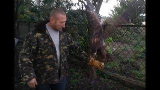 04.10.18 Тренировка ОРЛАН Белохвост:))) eagle training