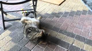 Katze Mimi – Baldrian-Katzenspielkissen