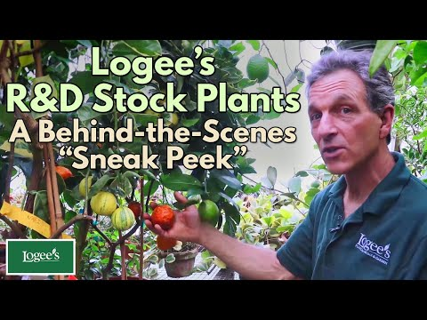 """, title : 'A Behind-the-Scenes """"Sneak Peek"""" at Some of Logee's R&D Stock Plants"""