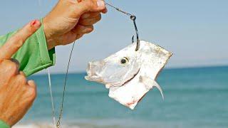 Multi Bait Shark Fishing Challenge