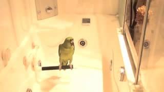 Попугай поет песню И конечно припевать лучше хором!