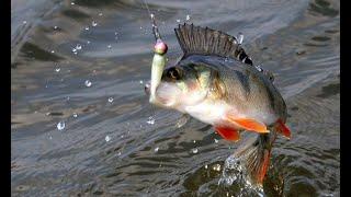 Зимняя рыбалка в твери на волге