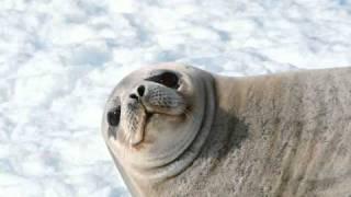 Feist- Sea Lion Woman - Pitto Bootleg - (Gow Edit)
