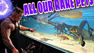ALL OUR RARE PETS - SHOP TOUR Displaying all the unique, rare hard to find fish.
