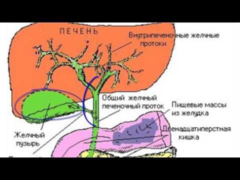 Таксономия гепатита с