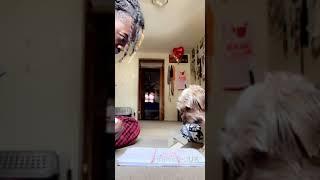 animales jugar x-0 con el perro