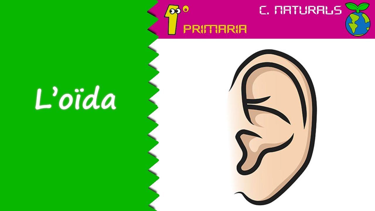 Ciències de la Naturalesa. 1º Primaria. Tema 2: L'oïda