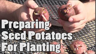 How To Prepare Potatoes For Planting - Chitting Tutorial