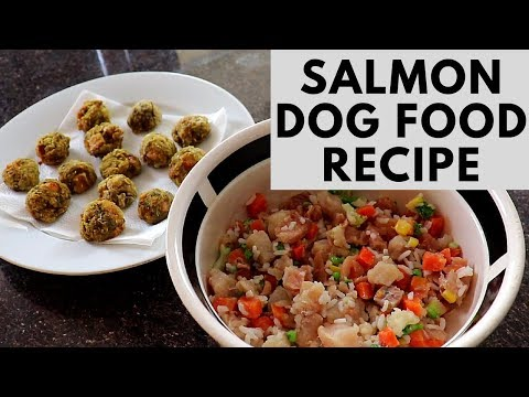 Salmon Dog Food and Treats Recipes - Easy and Healthy