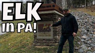 HUGE ELK IN PA | Elk Visitor Center Benezette PA