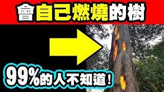 7個超能力植物|你聽過會自己燃燒的樹嗎?