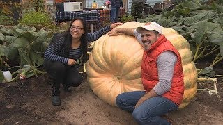 This is what it takes to move a 1,176 pound pumpkin