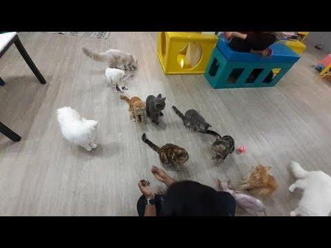 Hello Cat Cafe, Bisa Nongkrong Sekaligus Bermain Bersama Kucing