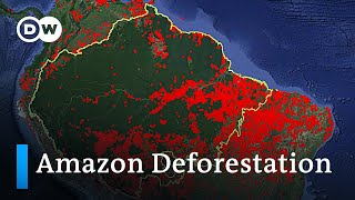 Who is responsible for the Amazon deforestation fires in Brazil?   DW Analysis