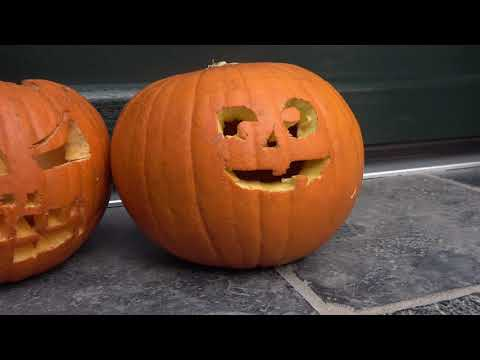 Fridolin und Halloween - Ein Video für Kinder