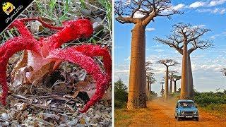 ต้นไม้และพันธุ์พืช สุดแปลก ประหลาด ที่คุณเห็นแล้ว ต้องอึ้ง !!