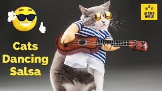 Cute and funny cat videos -Tik Tok #15