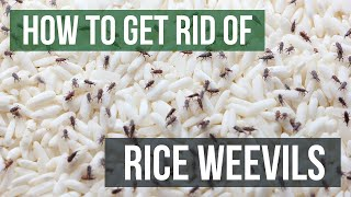 How to Get Rid of Rice Weevils