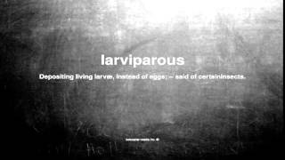 What does larviparous mean