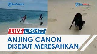 Sebelum Ditangkap dan Mati, Anjing Bernama Canon di Aceh Singkil Dilaporkan Sering Serang Warga