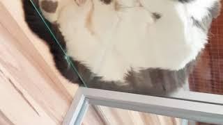 Милые котики Нежные котики Приколы с котами  Приколы с котятами  Приколы с кошками  Смешные коты и к