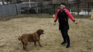 Учимся доверять собаке