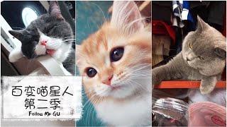 【抖音里的百变喵星人 第二季】猫咪的世界你不懂 有喵星人的世界更有情趣
