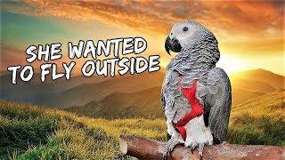 My Bird's First Outdoor Free-Flight Training | Vlog #432