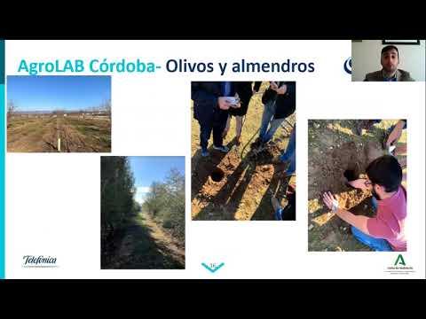 Agrodigital 2020 | Caso real: El control de clima con sensores, experiencia práctica en olivo y cítricos
