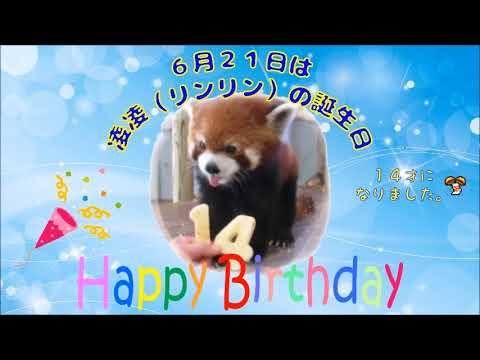 レッサーパンダ♡誕生日おめでとう★到津の森公園