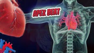 Apex beat (Human Heart ❤️ & Cardiology) ❤️🔊✅