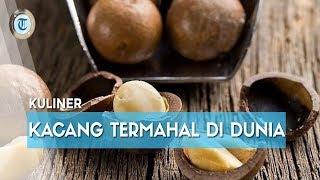 Macadamia, Kacang Termahal di Dunia yang Capai Rp350 Ribu/Pon