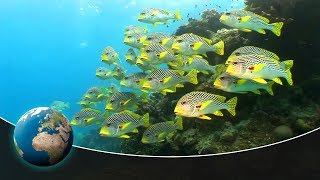 Symphony of life: Underwater world of Australia