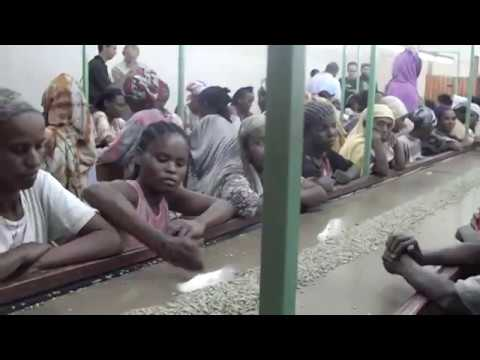 Visit harar dry mill station hand picking womens