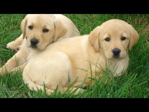 Eleanor Forte - Pups!【Original】